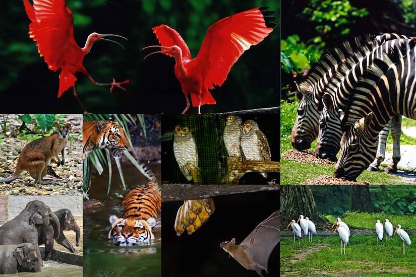 Zoo Taiping